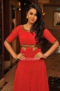 Pic Malayalam Actress Nikki Galrani 6987