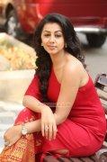 Recent Photo Cinema Actress Nikki Galrani 6178