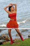 Actress Priyamani Hot Image 1